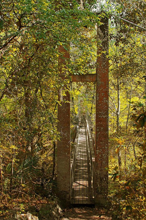 Swinging Photograph - Ravine Gardens State Park In Palatka Fl by Christine Till