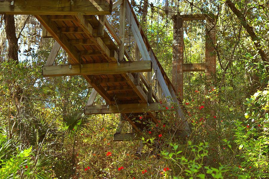 Swinging Photograph - Ravine State Gardens Palatka Florida by Christine Till