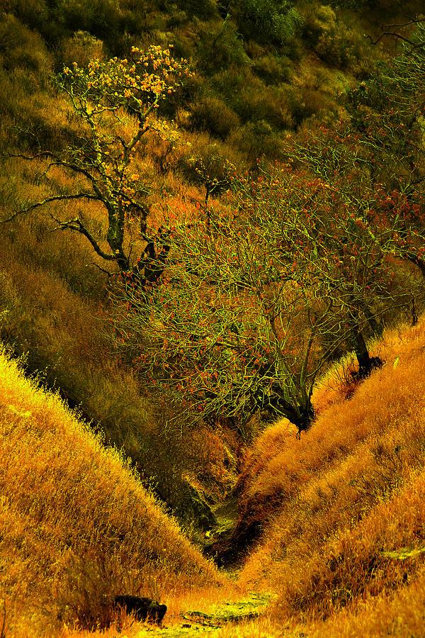 Del Valle Photograph - Ravine Trail by Karen  W Meyer