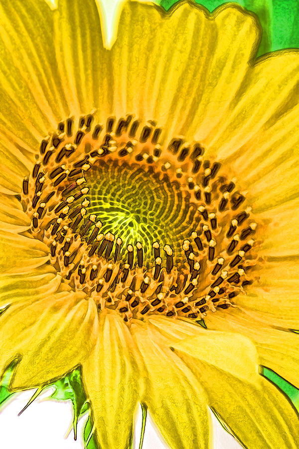 Ray of Sunshine Photograph by Joe Bledsoe