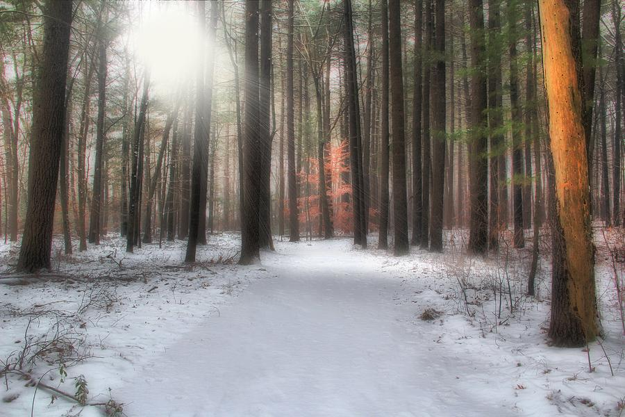 Pine Trees Photograph - Rays Of Light by Andrea Galiffi