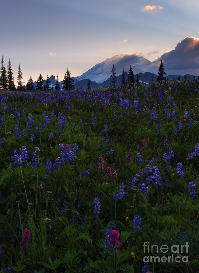 Sunbeams Photograph - Rays Over Rainier by Mike  Dawson