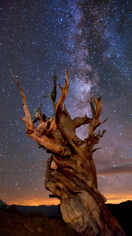 Tree Photograph - Reach For The Stars by Cat Connor