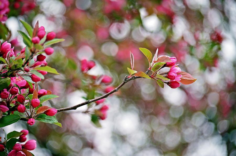 Floral Photograph - Reaching by David Earl Johnson