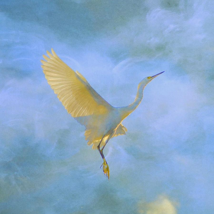 Egret Photograph - Reaching  by Eagle  Finegan