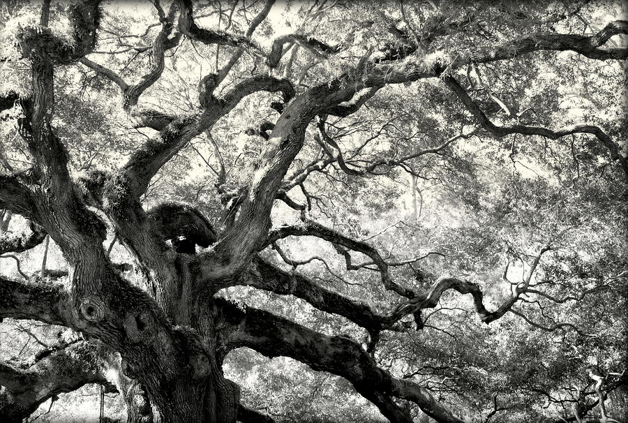 Abstract Trees Photograph - Reaching For Heaven by Karen Wiles