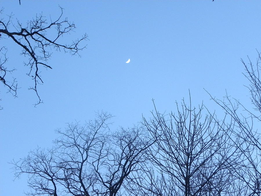 Trees Photograph - Reaching For The Moon by Cim Paddock