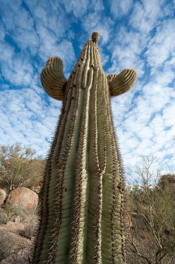 Cactus Photograph - Reaching For The Sky by Paul Johnson
