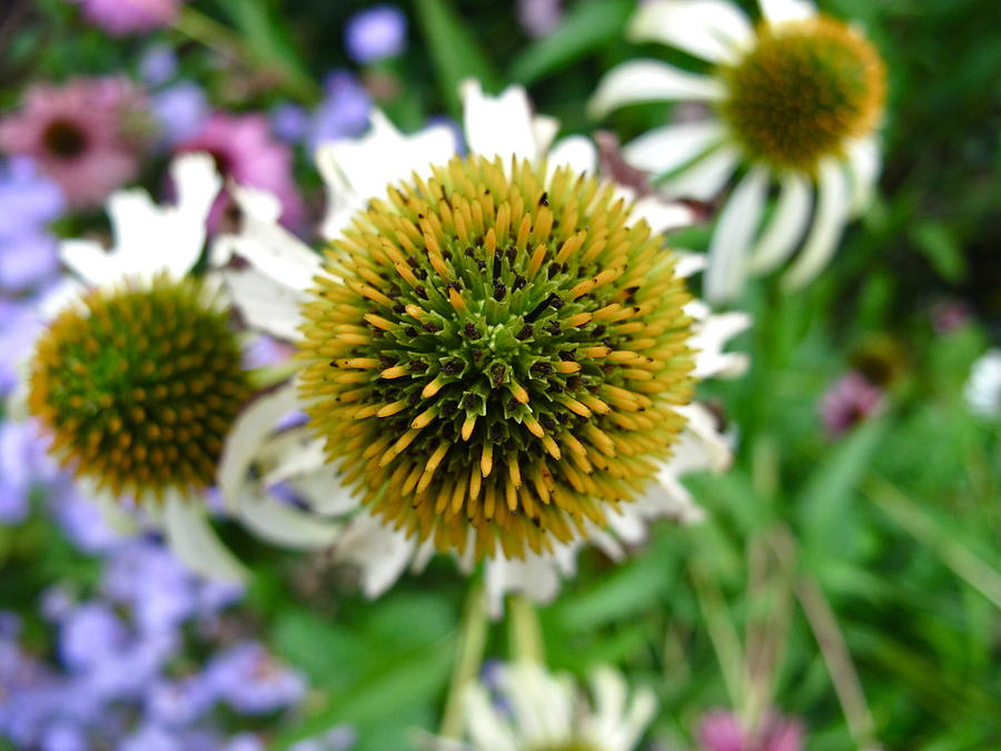 Flower Photograph - Reaching High by Lexi Heft