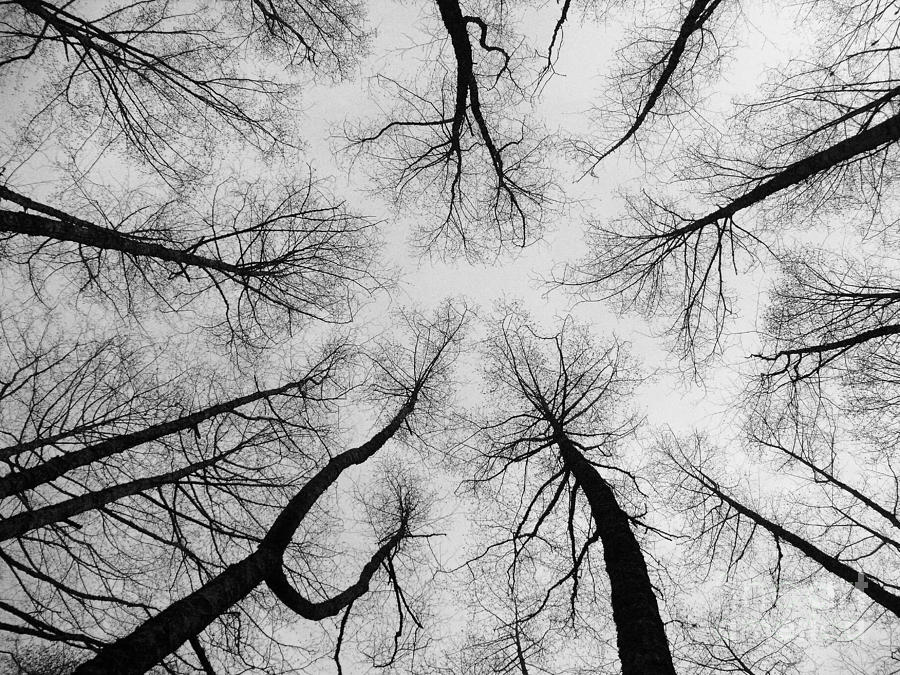 Trees Photograph - Reaching High by Bec Thomas