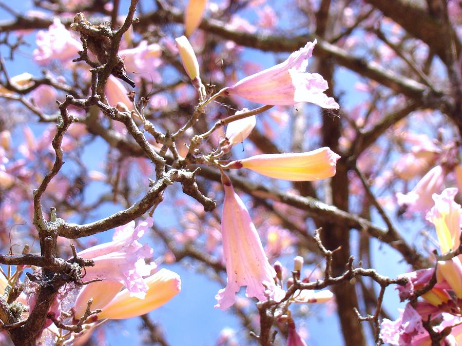 Arbor Photograph - Reaching Out by Van Ness