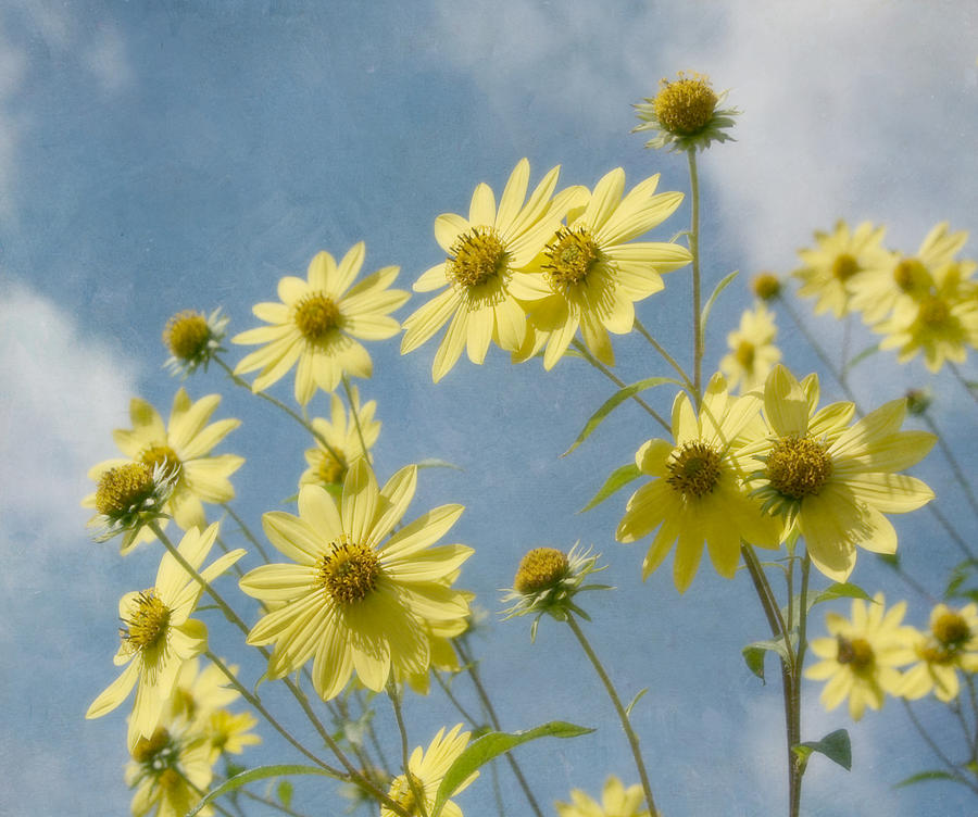 Yellow Flower Photograph - Reaching To The Sun by Kim Hojnacki