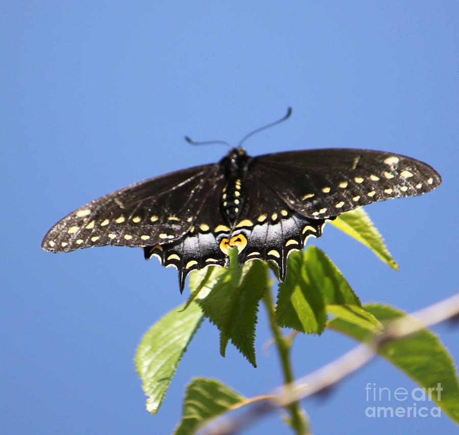 Butterfly Photograph - Ready For Take-off by French Toast