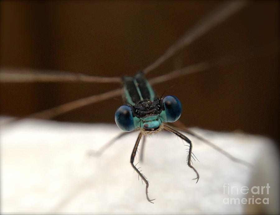 Dragonfly Photograph - Ready For Take Off by Gaby Tench