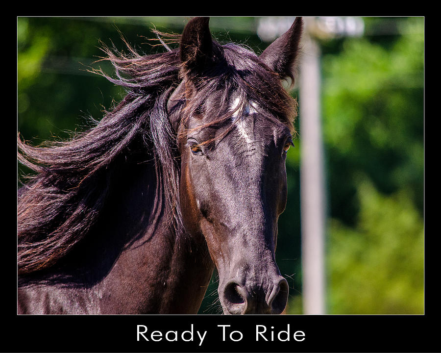 Horses Photograph - Ready To Ride by Dan Holland