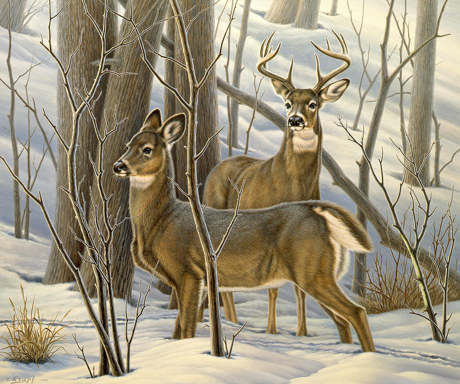 Wildlife Painting - Ready - Whitetail Deer by Paul Krapf