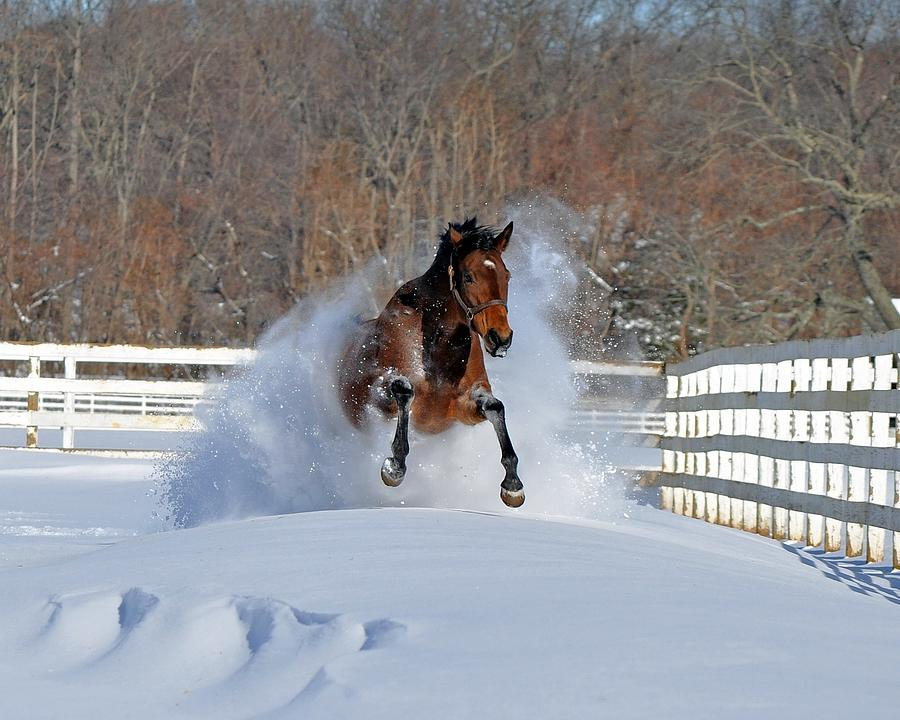 Horse Photograph - Real Horse Power by Mike Quinn