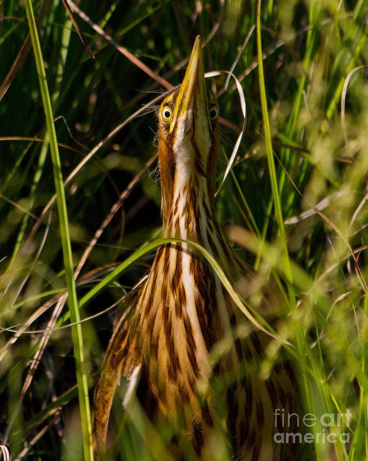 Really Im A Stick Not A Bird Photograph