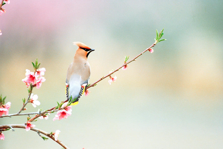Color Image Photograph - Rear View Of Bird Perching On Branch by Panoramic Images
