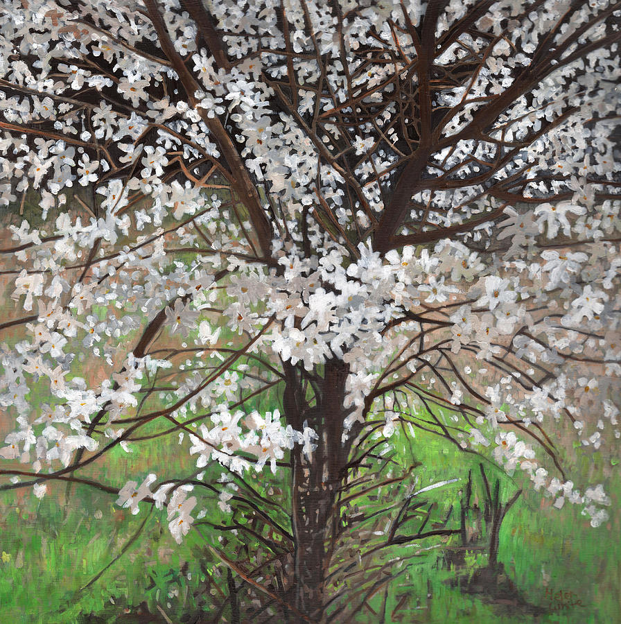 Blossom Painting - Rebirth by Helen White