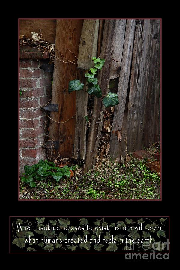 Ivy Photograph - Reclaim No.3 by Peter Piatt