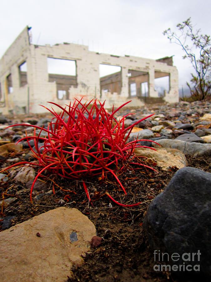 Barrel Cactus Photograph - Reclaimed by Dan Julien
