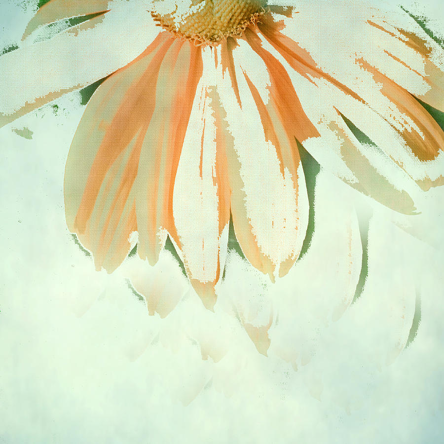 Coneflower Photograph - Reconstructed Flower No.1 by Bonnie Bruno