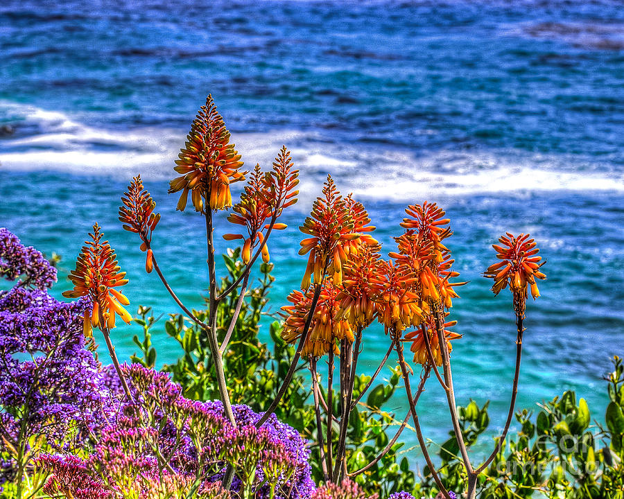 Red Photograph - Red Aloe By The Pacific by Jim Carrell