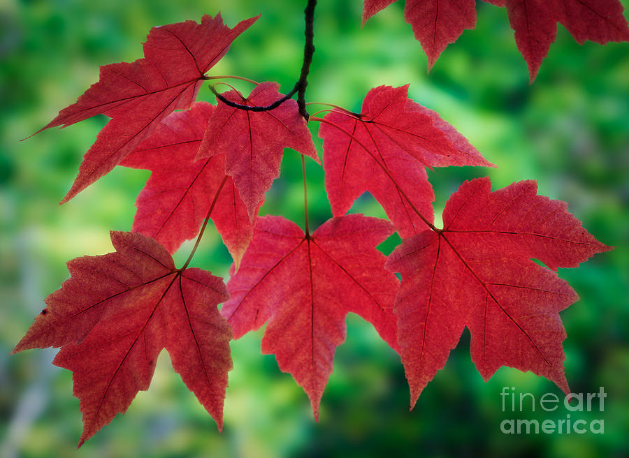 America Photograph - Red And Green by Inge Johnsson