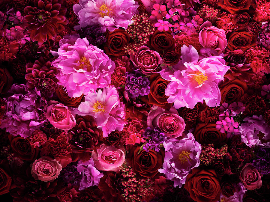 Red And Pink Cut Flowers, Close Up Photograph by Jonathan Knowles