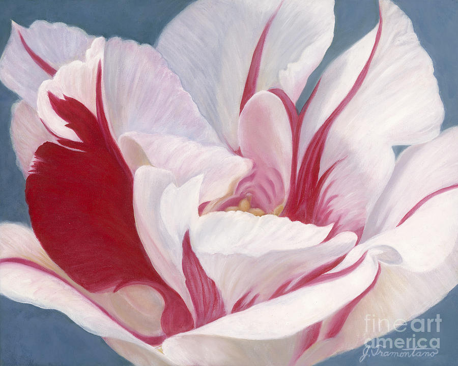 Red and White Tulip by Jeannette Tramontano
