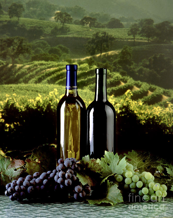 Vineyard Photograph - Red And White Wines by Craig Lovell