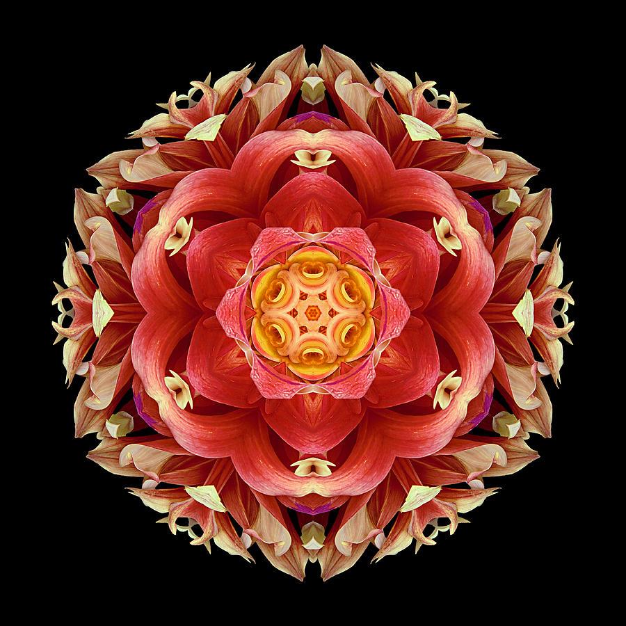 Flower Photograph - Red And Yellow Dahlia IIi Flower Mandala by David J Bookbinder