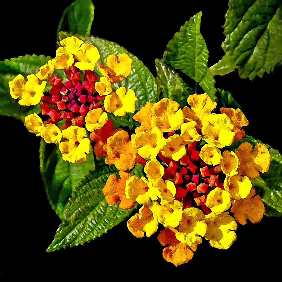 Red And Yellow Lantana Flowers With Green Leaves Painting By Bob And