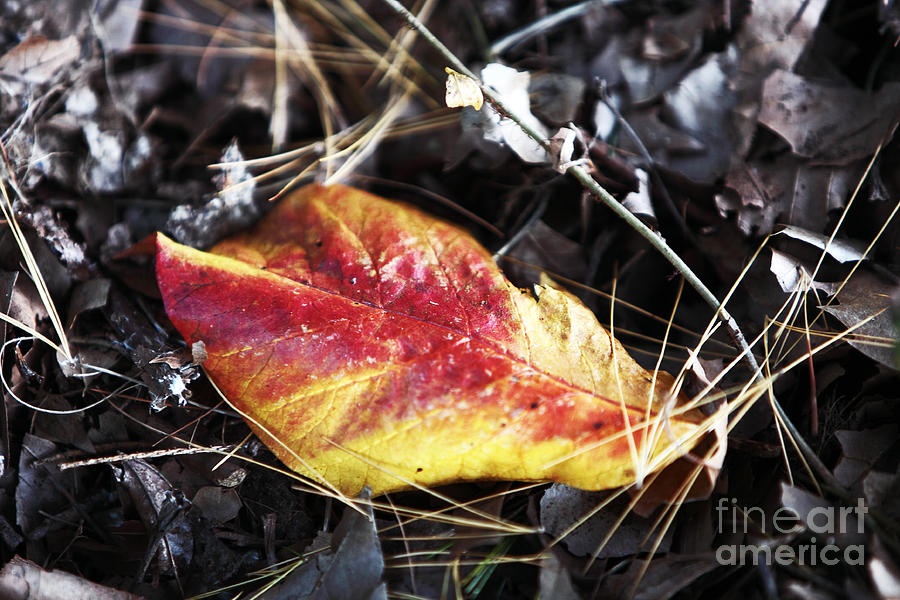 Nature Photograph - Red And Yellow by John Rizzuto