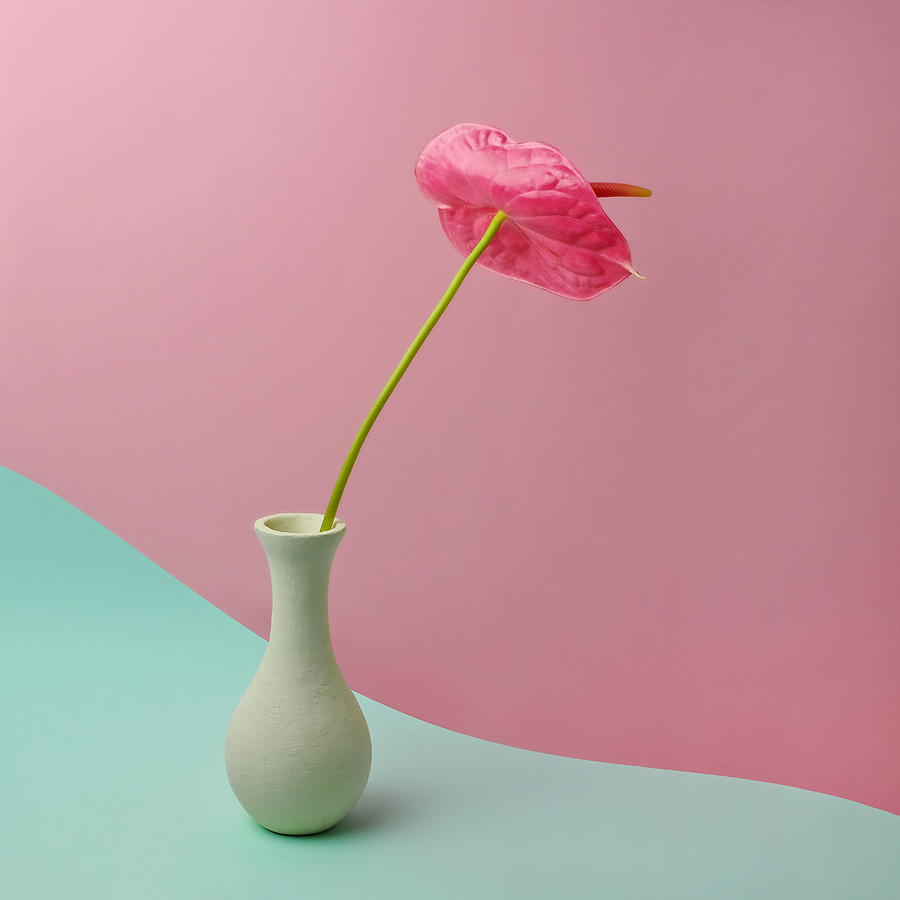 Red Anthurium In White Vase Photograph by Juj Winn