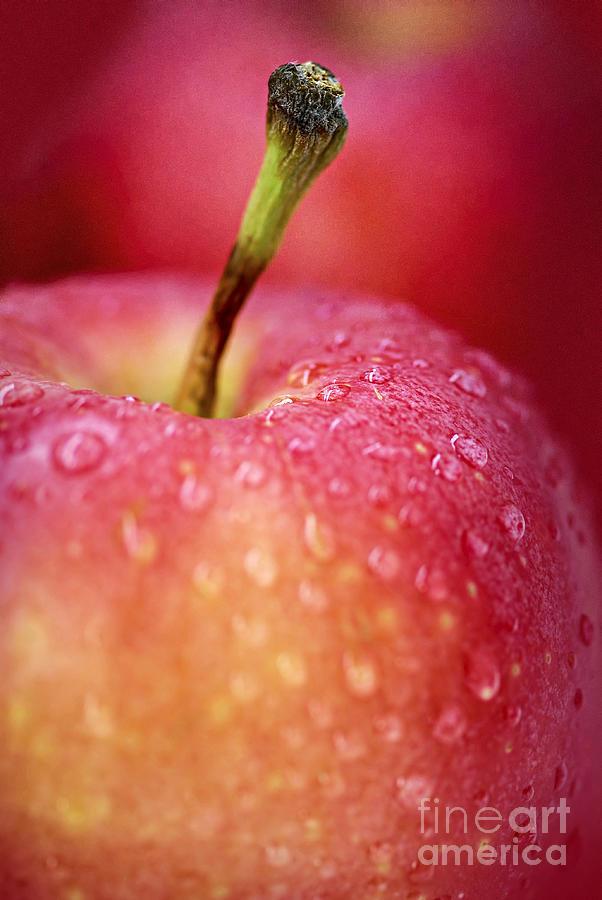 Apple Photograph - Red Apple Macro by Elena Elisseeva