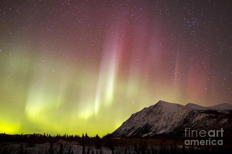 Horizontal Photograph - Red Aurora Borealis Over Carcross by Joseph Bradley