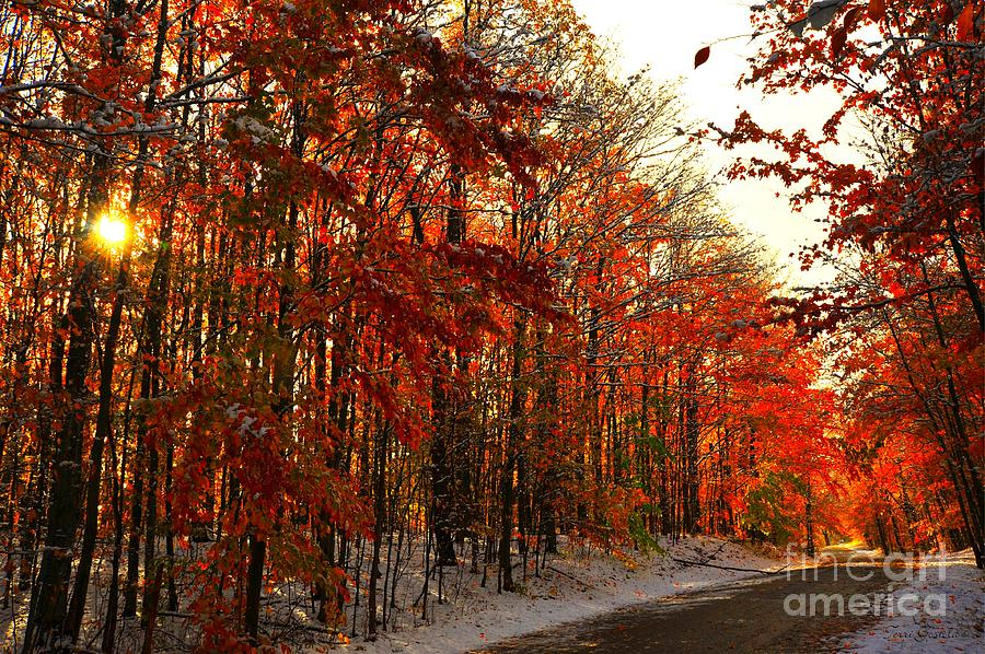 Red Leaves Photograph - Red Autumn Road In Snow by Terri Gostola