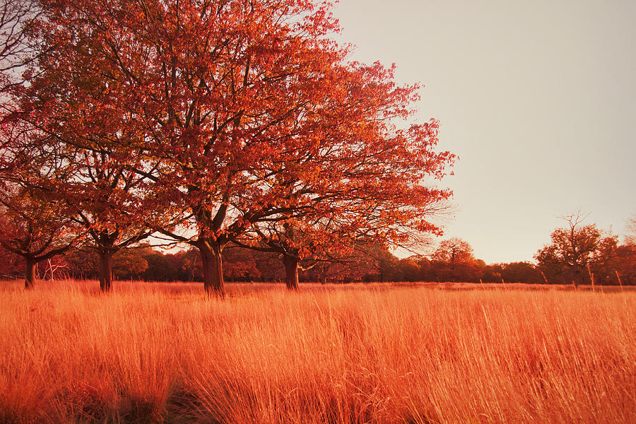 Autumn Photograph - Red Autumn by Violet Gray