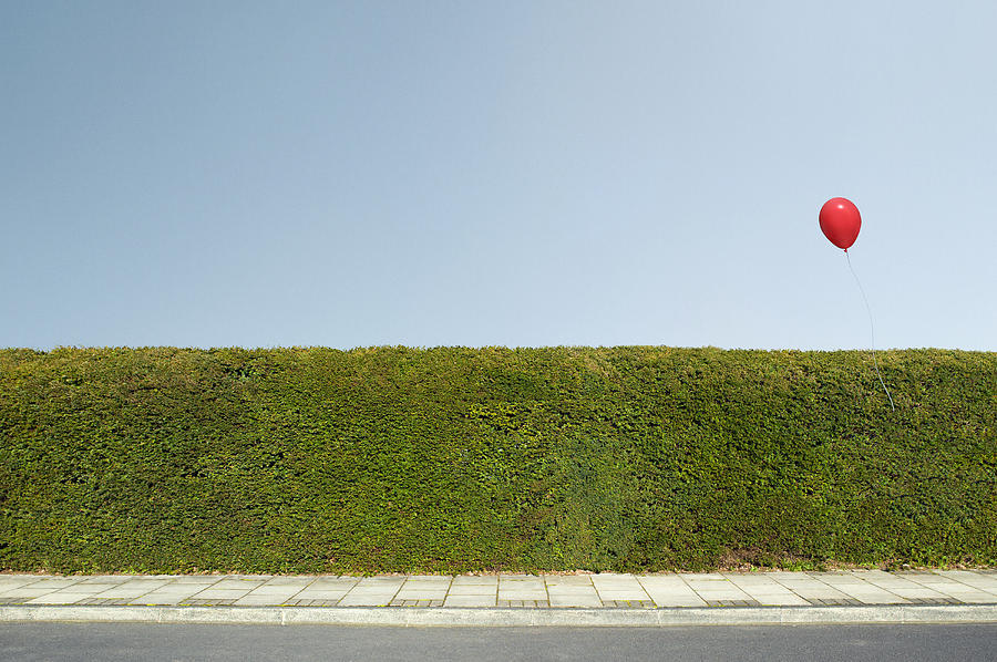 Red balloon floating over neatly trimmed hedges Photograph by Chris Clor