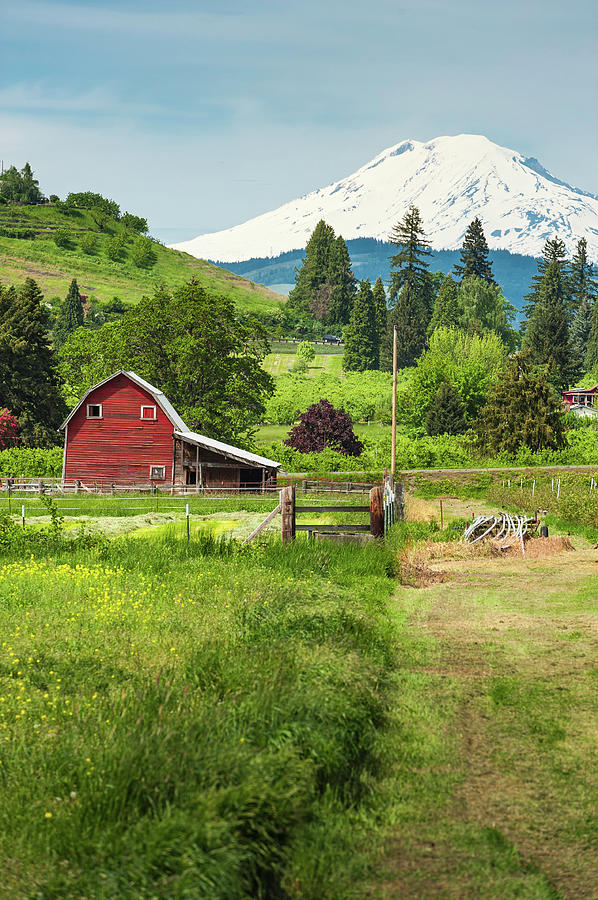 Red Barn Green Farmland White Mountain Photograph by Fotovoyager