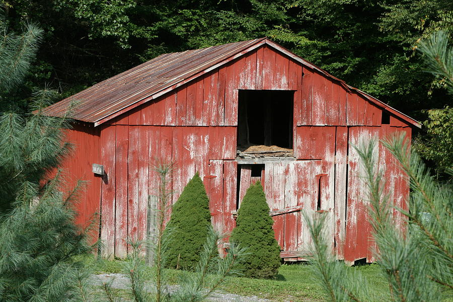 Barn Photograph - Red Barn Two Trees by Paulette Maffucci