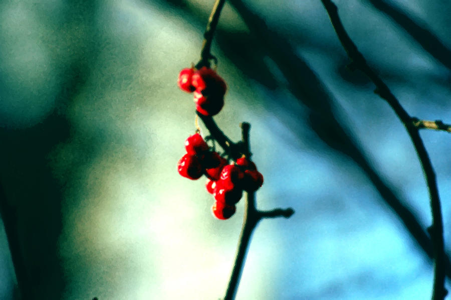 Berries Photograph - Red Berries On Canvas by Cara Moulds