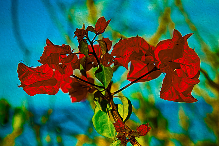 Botanical Garden Painting - Red Bougainvillea by Omaste Witkowski