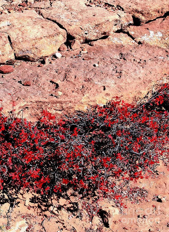His red bush — pic 13