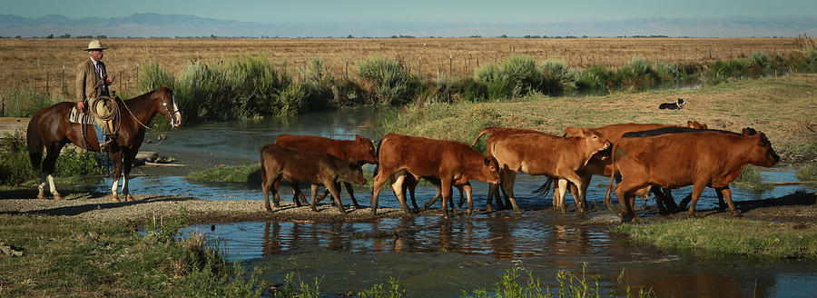 Cattle Photograph - Red Cattle by Diane Bohna