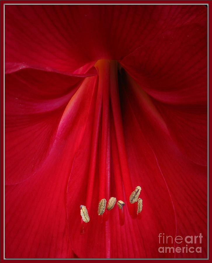 Macro Photograph - Red by Chris Anderson