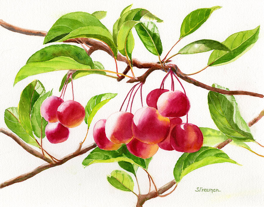 Watercolor Painting - Red Crab Apples by Sharon Freeman