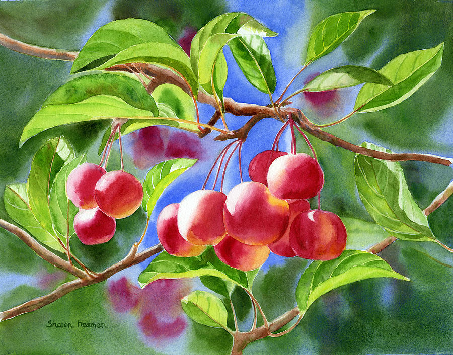 Red Painting - Red Crab Apples With Background by Sharon Freeman
